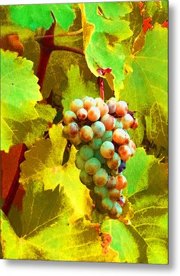 Paschke Grapes Metal Print by Kathy Corday