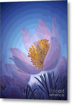 Pasque Flower Metal Print by Vivian Christopher
