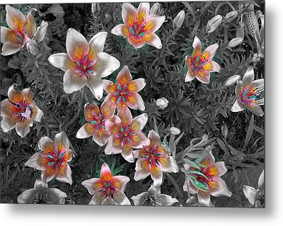 Pasqueflower In Silver Metal Print