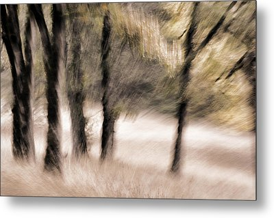 Passing By Trees Metal Print by Carol Leigh