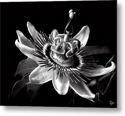Passion Flower In Black And White Metal Print by Endre Balogh