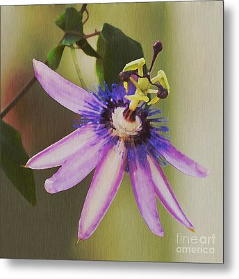 Passion Flower Metal Print by Artist and Photographer Laura Wrede