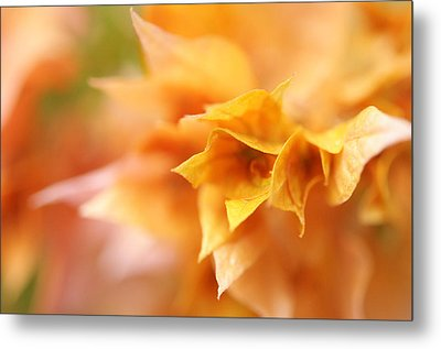 Passion For Flowers. Orange Delight Metal Print by Jenny Rainbow
