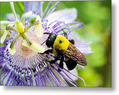 Passion Fruit Flower And Bee Metal Print