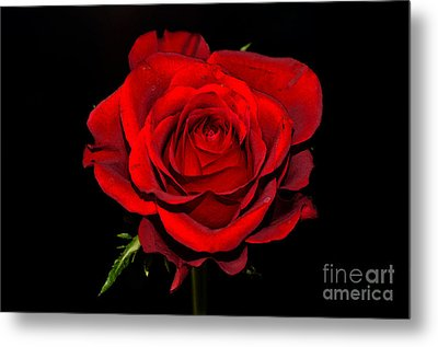 Passion Metal Print by Pravine Chester