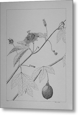 Metal Print featuring the drawing Passionflower Vine by Daniel Reed