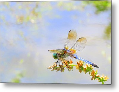 Metal Print featuring the photograph Pastel Dragonfly by Deborah Smith