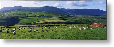 Pastoral Scene Near Anascual, Dingle Metal Print by The Irish Image Collection