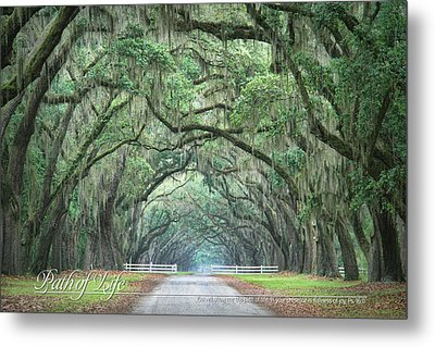 Path Of Life 2 Metal Print by Mary Hershberger