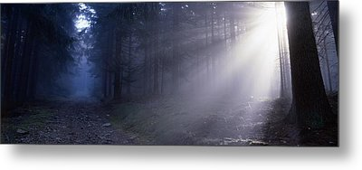 Path Through A Misty Forest Metal Print