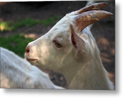 Metal Print featuring the photograph Patience Is A Virtue by Kay Novy