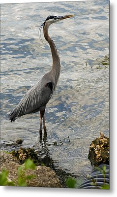 Patient Fisherman Metal Print