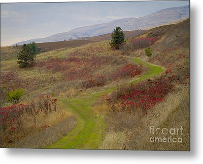 Paved In Green Metal Print by Idaho Scenic Images Linda Lantzy