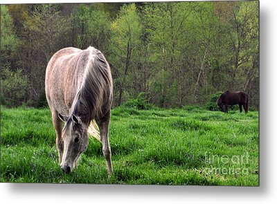 Peaceful Pasture Metal Print