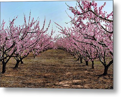 Peaches To Be Metal Print by Skip Willits