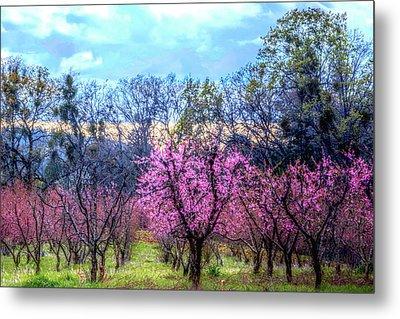 Peachy Blossum Scene2 Metal Print