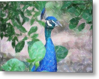 Metal Print featuring the photograph Peacock by Donna  Smith