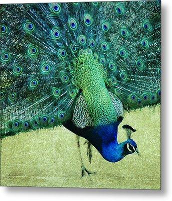 Peacock Pride Metal Print
