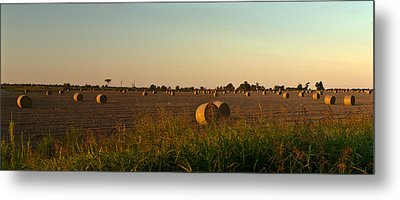 Peanut Field Bales At Dawn 1 Metal Print by Douglas Barnett