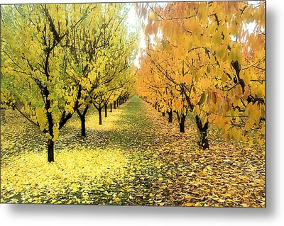 Metal Print featuring the photograph Pear Orchard In Fall by Katie Wing Vigil
