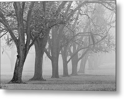 Pecan Grove Metal Print by Dan Wells