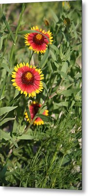 Metal Print featuring the photograph Peeking Through by Lynnette Johns