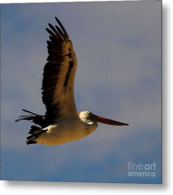 Metal Print featuring the photograph Pelican In Flight by Blair Stuart