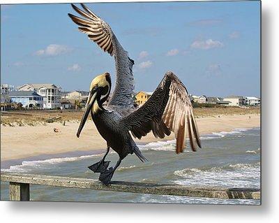 Pelican Landing On The Pier Metal Print by Paulette Thomas