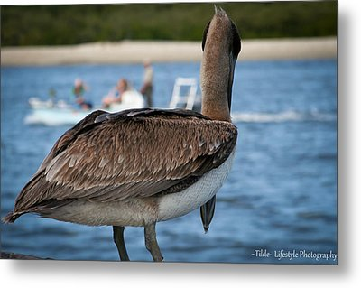Pelican People-watching Metal Print
