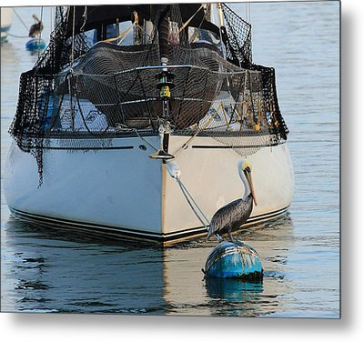 Metal Print featuring the photograph Pelican Pose  by Coby Cooper