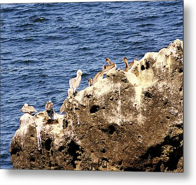 Pelican Rock Metal Print by Chris Anderson