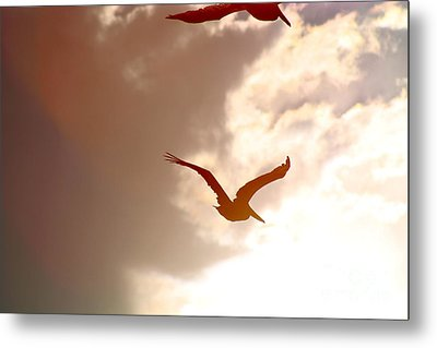 Pelicans At Sunset Metal Print by Lori Leigh