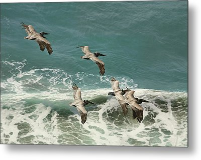 Pelicans In Flight Over Surf Metal Print by Gregory Scott