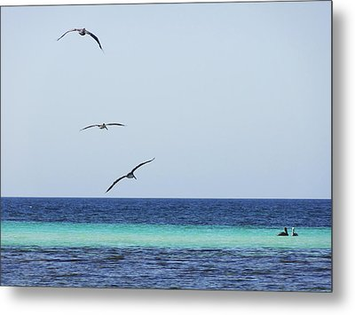Pelicans In Flight Over Turquoise Blue Water.  Metal Print