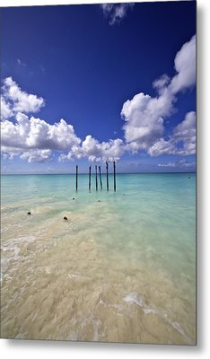 Pelicans Of Sunny Aruba Metal Print