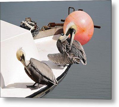 Pelicans Metal Print by Paulette Thomas