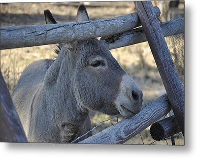Metal Print featuring the photograph Pensive Donkey by Michael Dohnalek