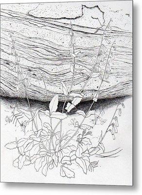 Penstemon Metal Print by Inger Hutton