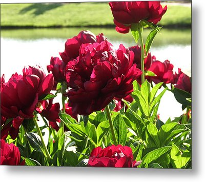 Metal Print featuring the photograph Peony Burgandy by Rebecca Overton