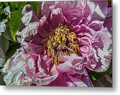 Peony Metal Print by Celso Bressan