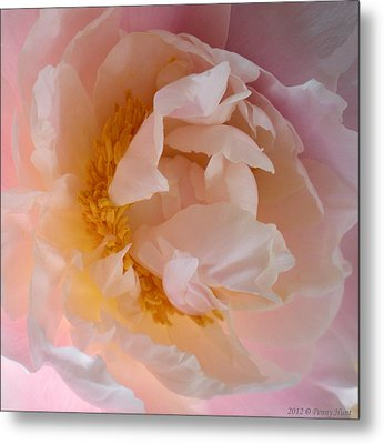 Metal Print featuring the photograph Peony Pink by Penny Hunt