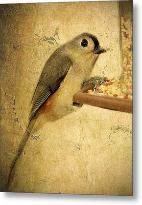 Perched Metal Print by Kathy Jennings