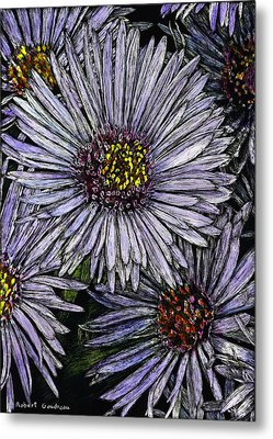 Perennial Asters Metal Print by Robert Goudreau