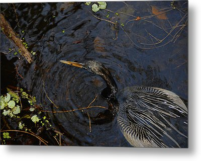 Perfect Catch Metal Print by David Lee Thompson