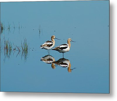 Perfect Reflection Metal Print by Kathy Gibbons