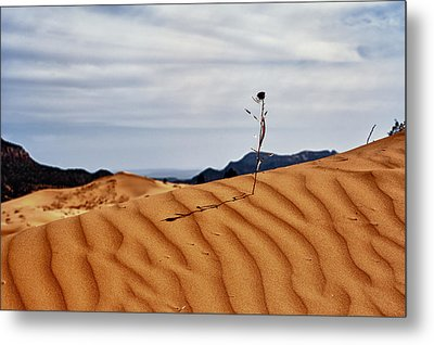 Perseverance Metal Print by Stephen Campbell