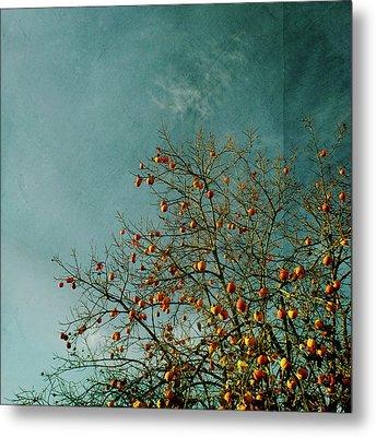 Persimmon B O U N T Y Metal Print by Paul Grand Image