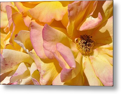 Metal Print featuring the photograph Petal Profusion by Sandy Fisher