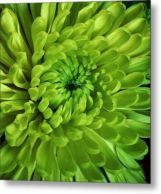 Petals Of Green Metal Print by Bruce Bley
