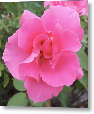 Metal Print featuring the photograph Petals Of Pink by Lynnette Johns